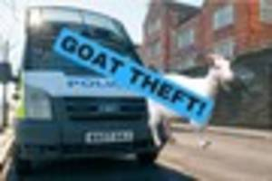 Goats stolen and fuel illegally siphoned in busy week for police...