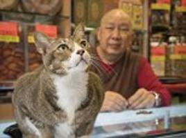 Endearing bond of Hong Kong shop owners and their cats