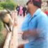 Man plays with monkey then slaps it across the face