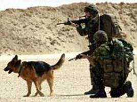scores of war  dogs put down because they're 'old'