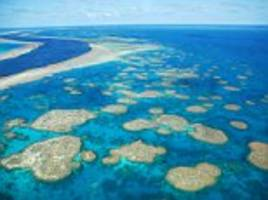man dies and woman fighting for life on great barrier reef