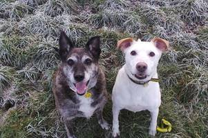 dog best friends looking for west lothian home