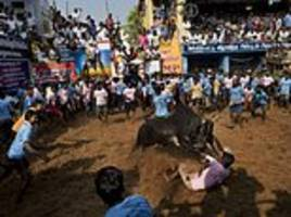 bull-taming tradition resumes in southern indian state