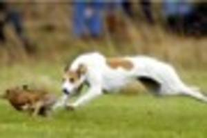 Hare courser comes up with lame excuse after throwing dead animal...
