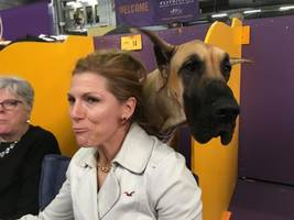 seen at the westminster dog show: 42 owners who look weirdly like their dogs