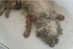 Lincoln dog savaged amid reports pets are being killed and eaten
