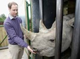prince william's ivory ban 'could see items destroyed'