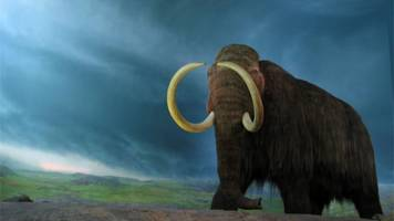 a form of woolly mammoth resurrection might be closer than we thought
