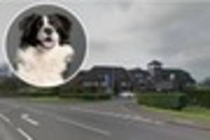 Dog 'stolen from car, then dumped outside Long Eaton Police...