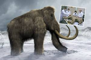 woolly mammoth set to return to life as scientists make jurassic park breakthrough