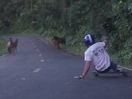 skateboarder's mountain stunt disrupted by wild horses