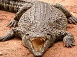 18ft crocodile rips off man's leg after being fed chicken