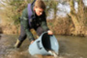 Thousands of fish released into river that suffered one of worst...