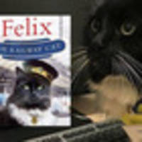 meet felix, the huddersfield rail station cat with 100,000 followers and a book deal