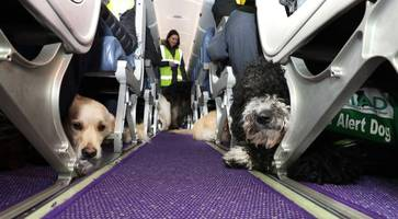 Belfast airport puppy patrol takes flight to learn new skills as part of life-saving medical training