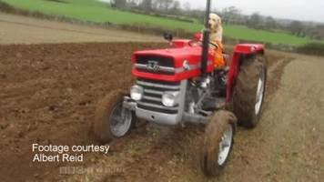 dog shows off tractor driving skills