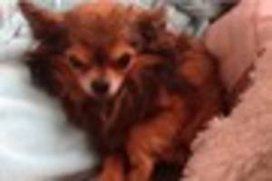This dog was found in Gillingham three years after it went...