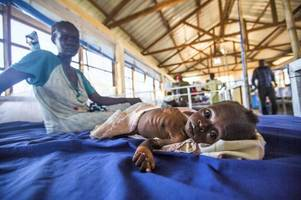 More than 4.9m people suffering as famine grips South Sudan