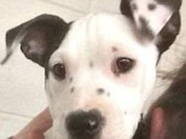 Puppy born in shelter has 'selfie' on ear in New York