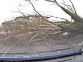 storm doris blows tree in front of moving car in spalding