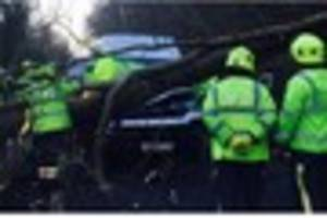 This falling tree 'missed cyclist by seconds', say police