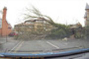 dashcam captures driver's lucky escape as big tree falls on road...