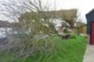 storm doris rips tree from its roots in chelmer village