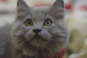 New Study Says Having a Pet Cat Does Not Cause Mental Illness