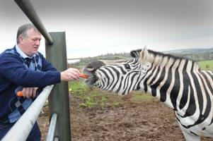 zebra poppy is the talk of maybole after farmer brings her to live on his land in ayrshire town