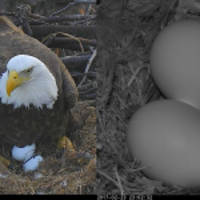Mr. President & The First Lady Are Egg-Specting Two Eaglets!