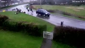 car crashes into two horses and riders in witcham