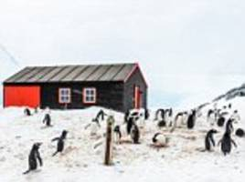 265 people are in the race to run an antarctic post office