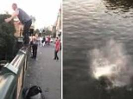 Man front-flips into Yarra River in front of crowds