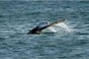 public urged to stay away from devon's whales