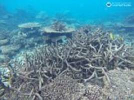 could the great barrier reef be wiped out?