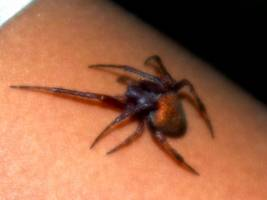 The World's Spiders Found To Consume As Much Prey As All The World's Whales