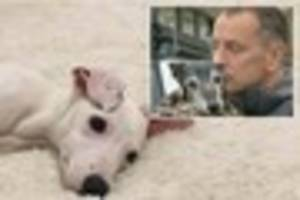 Adorable George is the new puppy for Mark Woods the owner of the...
