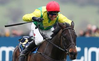 irish victory in the cheltenham gold cup as frontrunners flounder