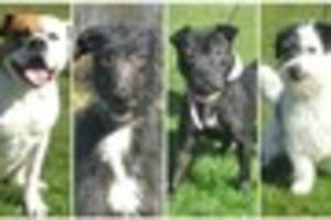 VIDEO: Give a Dog A Home: Dogs from City Dogs' Home in Bucknall