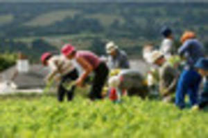 'rise in living wage could lead to reduction in field workers'