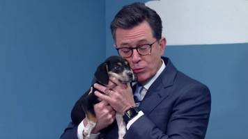 stephen colbert and bryan cranston lie to get you to adopt puppies