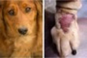 Dog owners offered reassurance as new outbreak of flesh-eating...