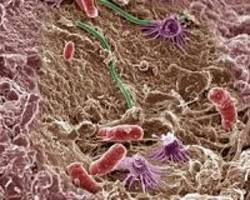 Microbes adapt to colonize different body parts