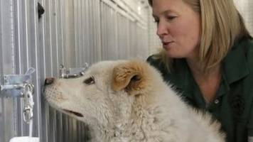 'Condemned' South Korean dogs find sanctuary in the US