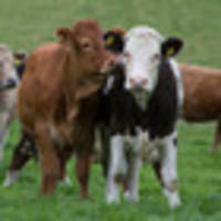 nz exporters welcome china chilled meat deal