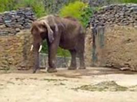 elephant starving because zoo can't afford to feed her