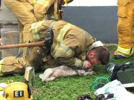 santa monica firefighter saves dog with mouth-to-snout