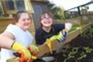 Pioneering Curnow School students branch out into fruit and veg...