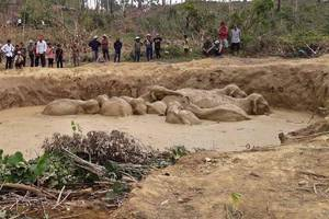 11 elephants in cambodia get stuck in crater created by b-52 bomber; video