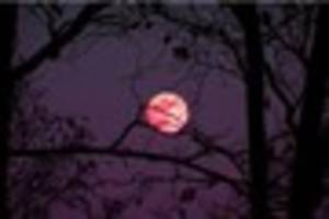 everything you need to know about april's pink moon that appears...